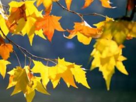 秋天的句子