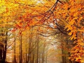 描写秋天的片段