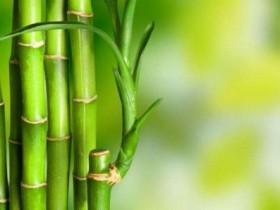 描写竹子的句子