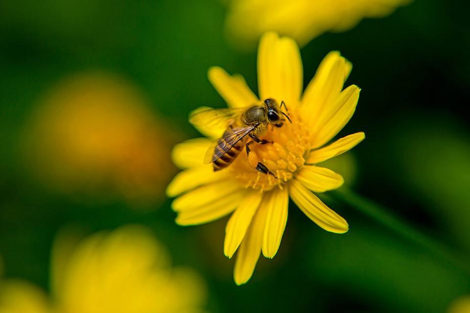 描写蜜蜂的句子