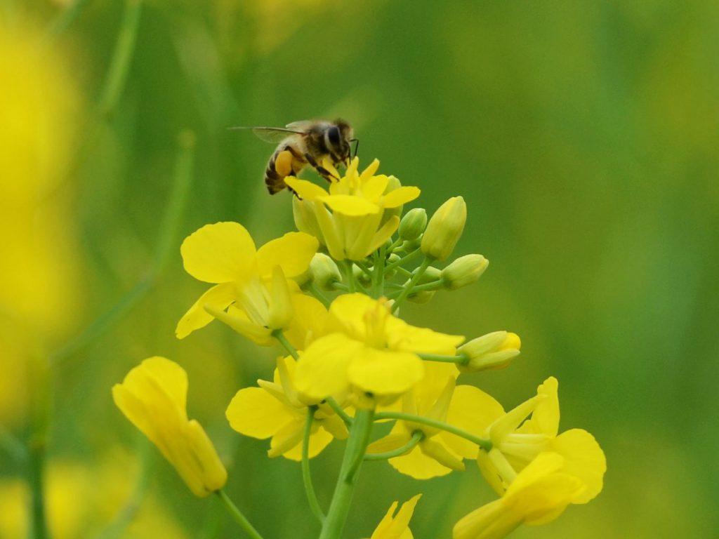 形容蜜蜂勤劳的句子