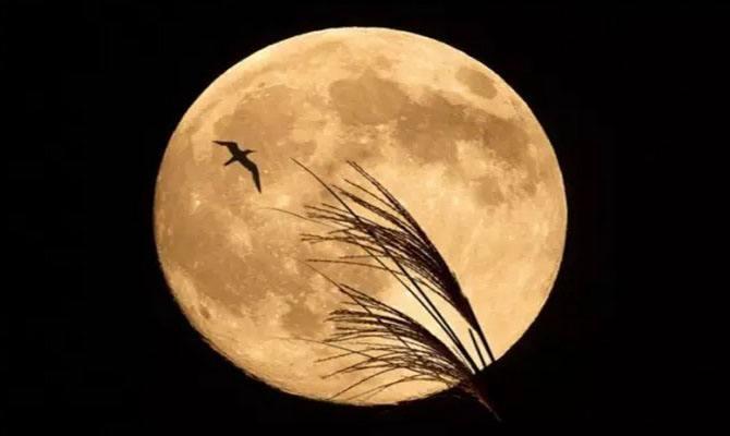描写月亮的诗句