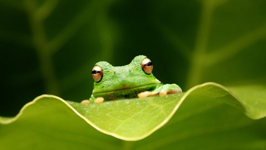 描写青蛙的句子