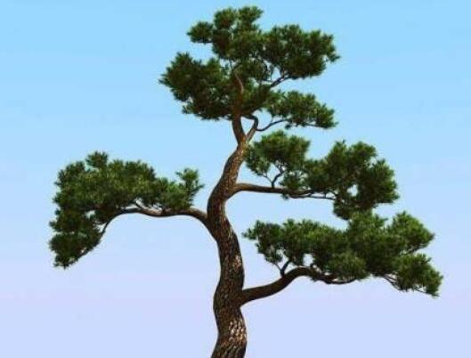 赞美松树的名言